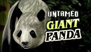Дикая Большая Панда